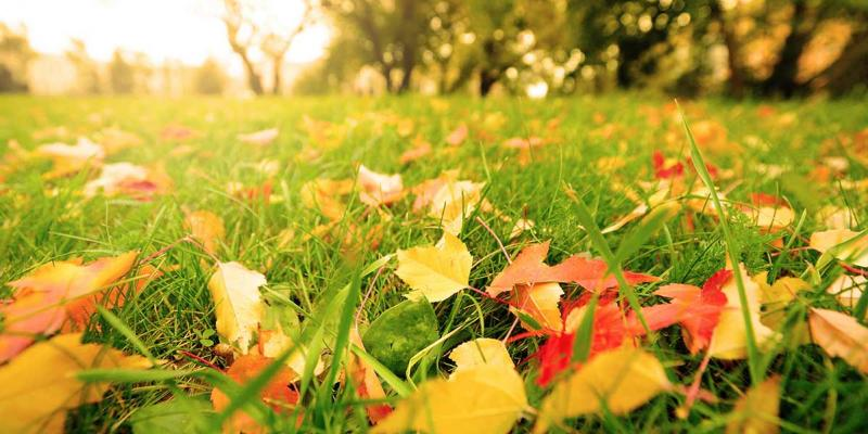 lawn with fall leaves